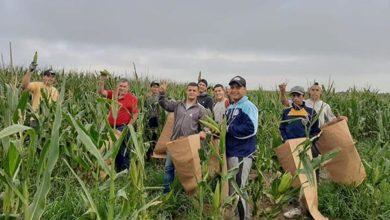 Photo of En un día, juntaron 10 mil choclos para donar a 1000 familias