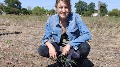 """Photo of INGENIERA TORRI: """"PLANTAMOS 700 ARBOLES"""""""
