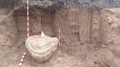Photo of Tortugas. realizan una excavación paleontológica.