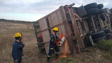 Photo of Bell Ville: Volcó un camión cargado con animales vacunos